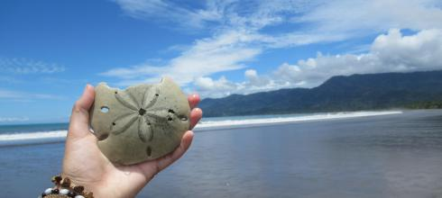 """A sand dollar, or """"sea cookie"""", found on the beach of Marino Ballena National Park."""