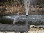 I saw another heron at my university today - it must be heron season