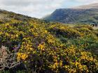 Beautiful wildflowers seen in Killarney National Park
