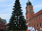 Christmas tree in Old Town