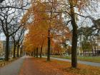 Autumn is in full swing in The Netherlands and the bike lanes are covered in leaves