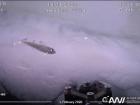 A small Polar cod found swimming below the sea ice (Photo: Christian Katlein)