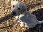 """मेरा नया कुत्ता - उसका नाम """"फ़्रॉस्टी"""" है"""