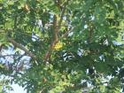 A lovely yellow Warbler bird by the river near the tree