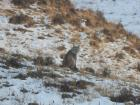 The first time I ever saw a Eurasian lynx was especially exciting
